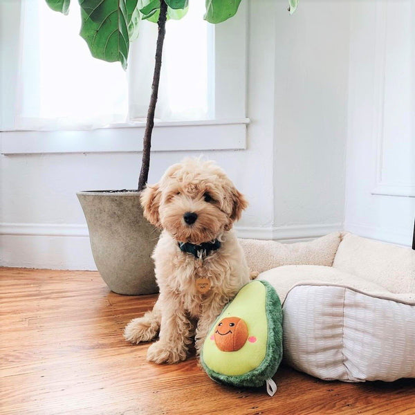 Avocado Plush Dog Toy - Canine Compassion Bandanas