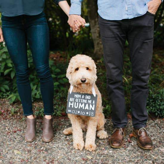 Pet's Baby Announcement Chalkboard - Canine Compassion Bandanas