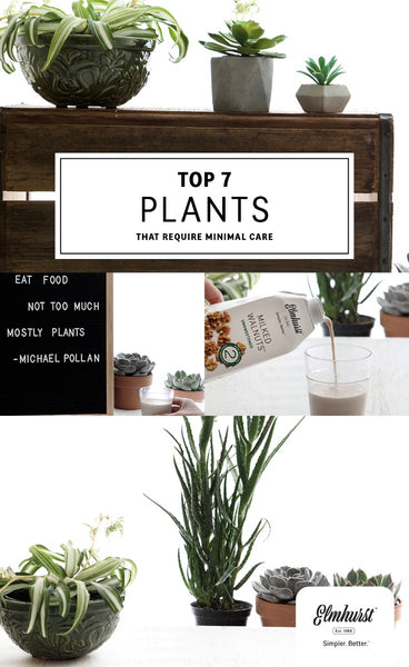 Top 7 Plants that Require Minimal Care