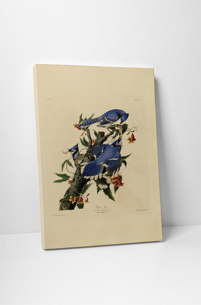 John Audubon Blue Jay Canvas Wall Art