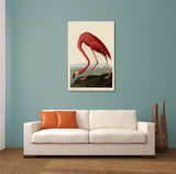 John Audubon American Flamingo Canvas Wall Art