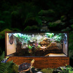 Luxurious Large Terrarium with accessories
