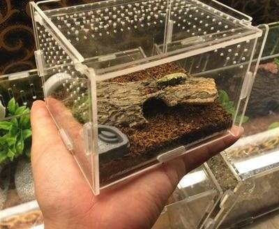 Feeding box terrarium