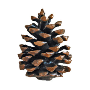 Ponderosa Pine Cone Knob (vertical, medium) | Timber Bronze | Oregon