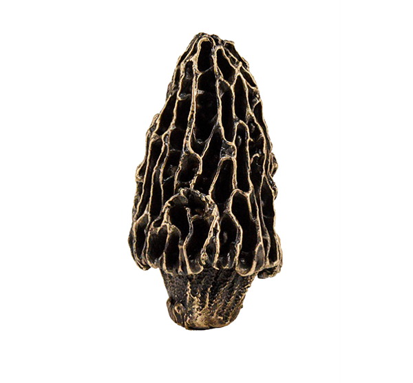 Morel Mushroom Knob | Timber Bronze | Oregon