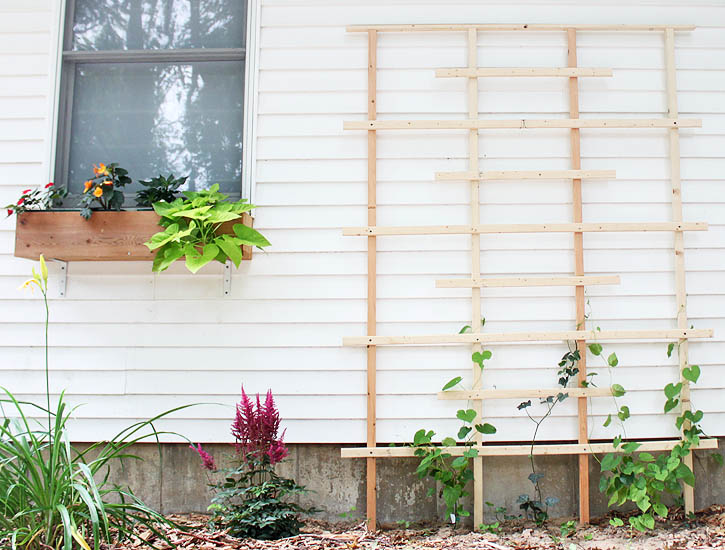 Trellises are a nice way of filling an empty space in a garden or back yard