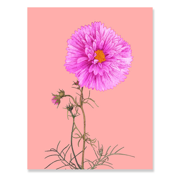 Cosmos Print by Adriana Picker