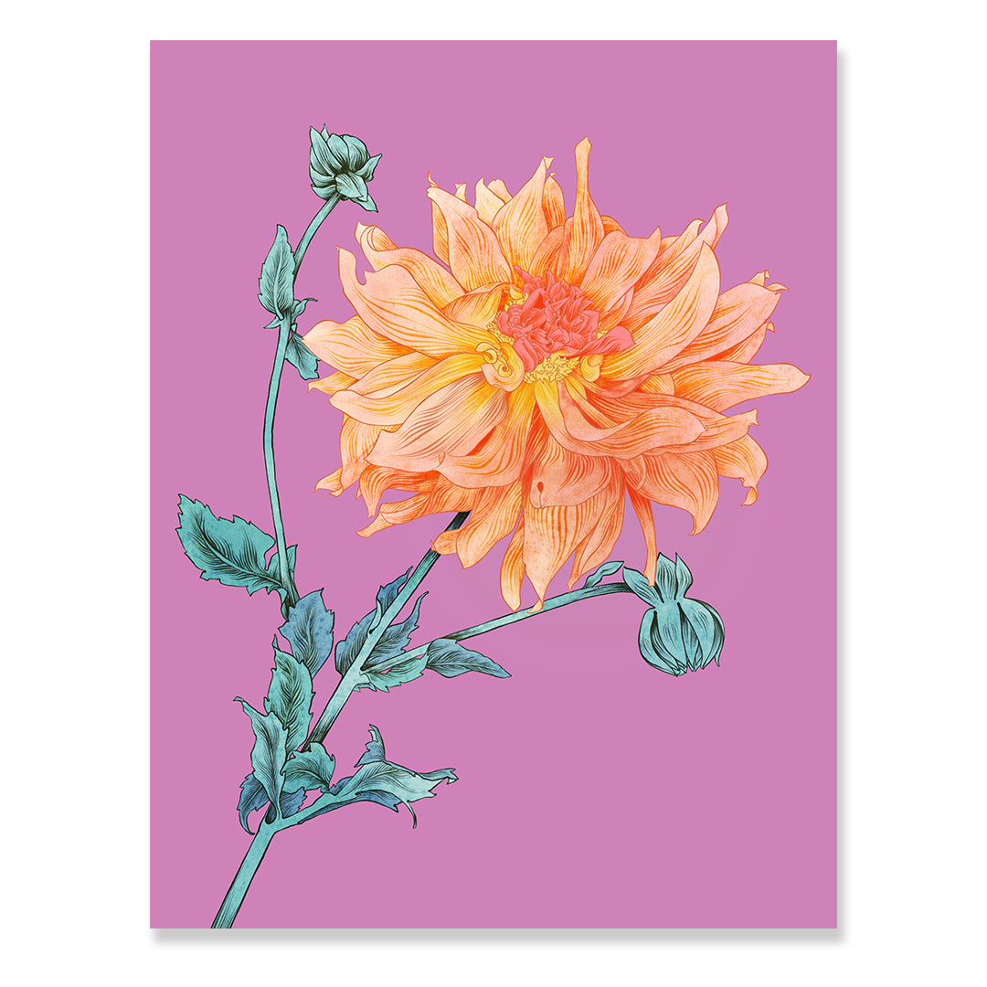 Dahlia Print by Adriana Picker