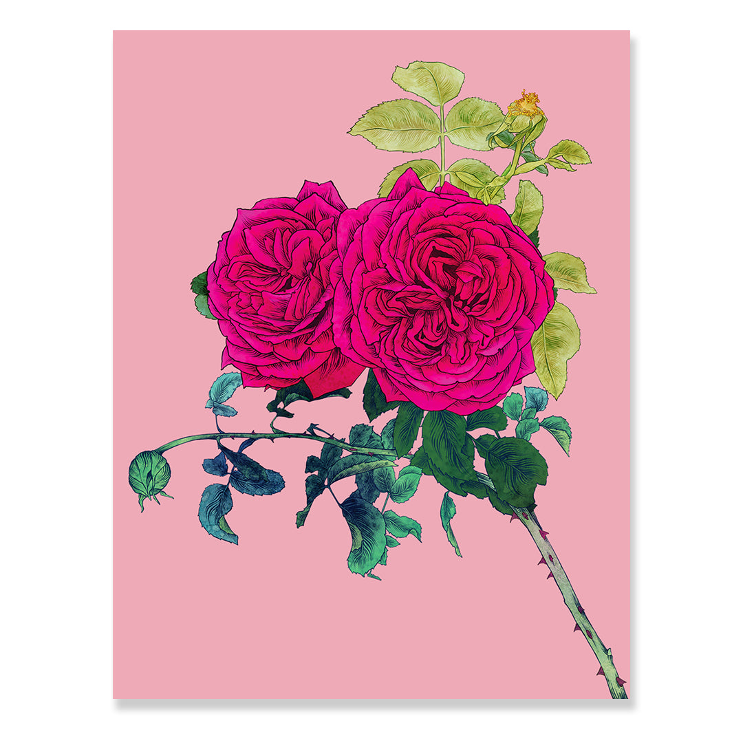Rose Print by Adriana Picker