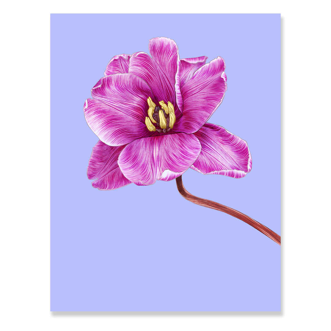 Tulip Print by Adriana Picker