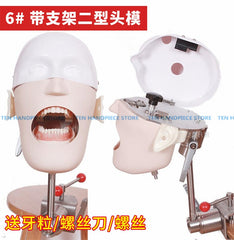 Dental headmodel simulation moldel system