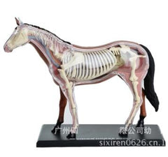 Horse specimen anatomy model