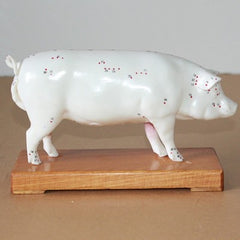 Pig Acupuncture Point Model veterinary animal Dissection model