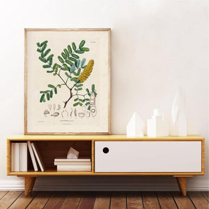 French Plant Botanical Studies Illustrations Prints - THE VINTAGE LOOK Henley-on-Thames