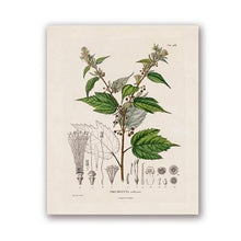 Load image into Gallery viewer, French Plant Botanical Studies Illustrations Prints - THE VINTAGE LOOK Henley-on-Thames