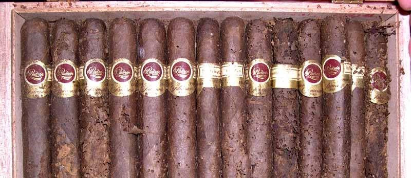 An In Depth Guide on How to Handle Tobacco Beetles in Your Cigar Humidor