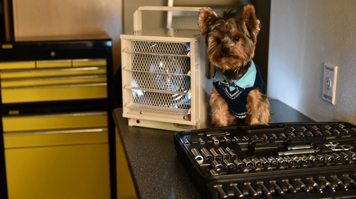 Is Your Heater Making Your Dog Too Hot? | NewAir