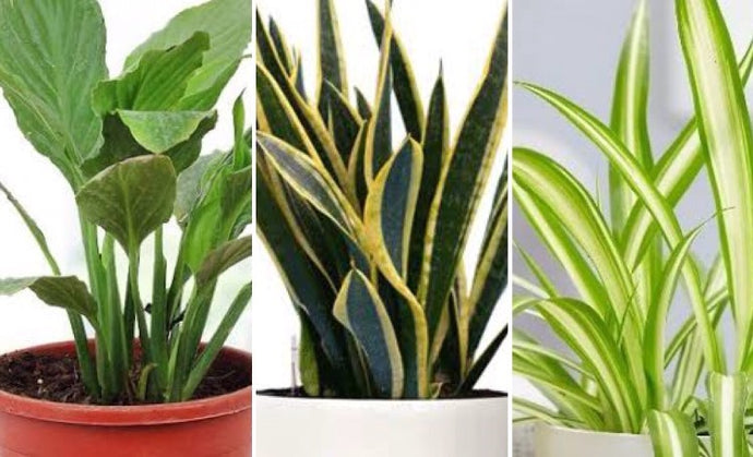 Air Purifying Plants - The Best Pollution Fighters as per NASA study