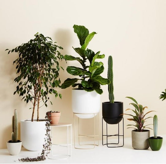 Most Friendly & Easy to care plants