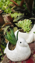 Load image into Gallery viewer, Bird Shape Planter with Succulent - QYARI