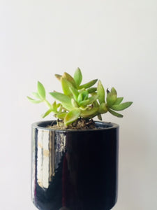 Cylinder Shape Small Pot