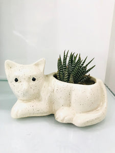 Cat Shape Planter (small) with Plant - QYARI