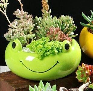 Frog Shape Bowl Planter with Plant - QYARI