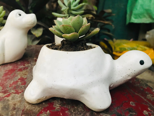 Turtle Shape Planter (small) with Plant