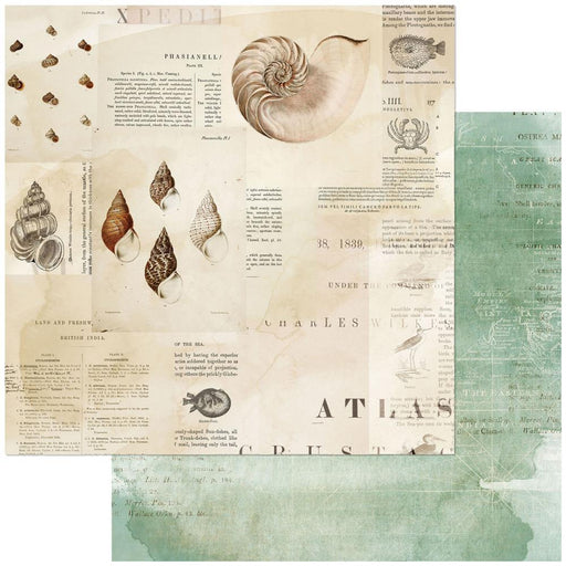 49 AND MARKET  12 X 12  PAPER VINTAGE ARTISTRY SHORE TRITON