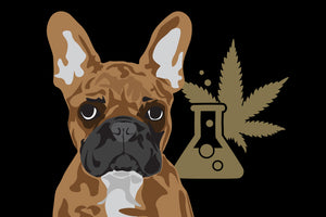 CBD has been shown to accentuate natural pet health.