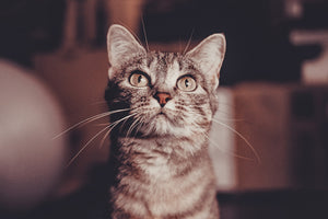 What CBD Products Cats Like the Most?