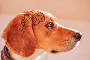 Can CBD Improve Brain Function in Pets