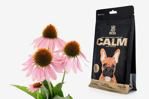 Calm treats use echinacea for dogs for a variety of benefits