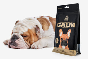 Calm treats are an excellent solution for treating anxiety in dogs