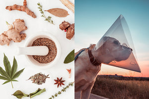 Studies have shown that certain herbs can help treat cancer in dogs.