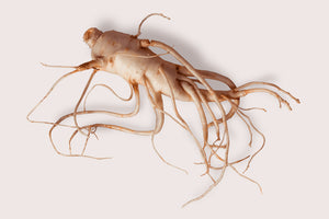 Some professionals use ginseng for dogs along with other herbs.