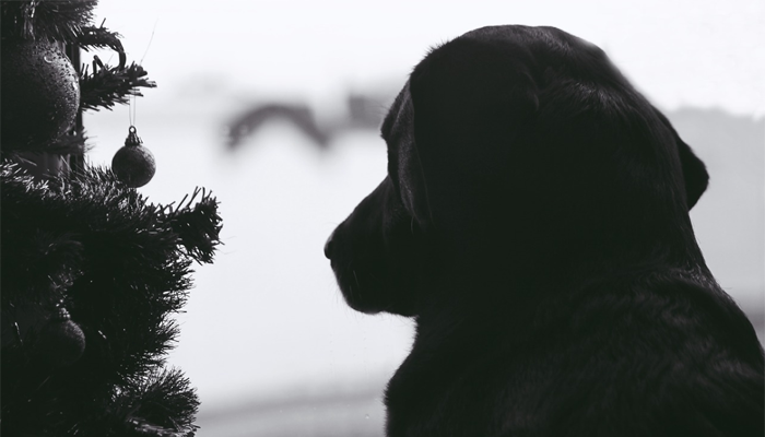 black dog beside christmas tree