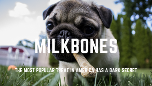 Milkbones Exposed