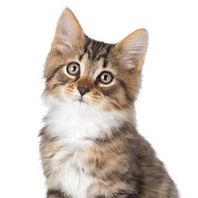 Cat Supplies, Cat Treats, Cat Toys, Cat Supplements, Cat health