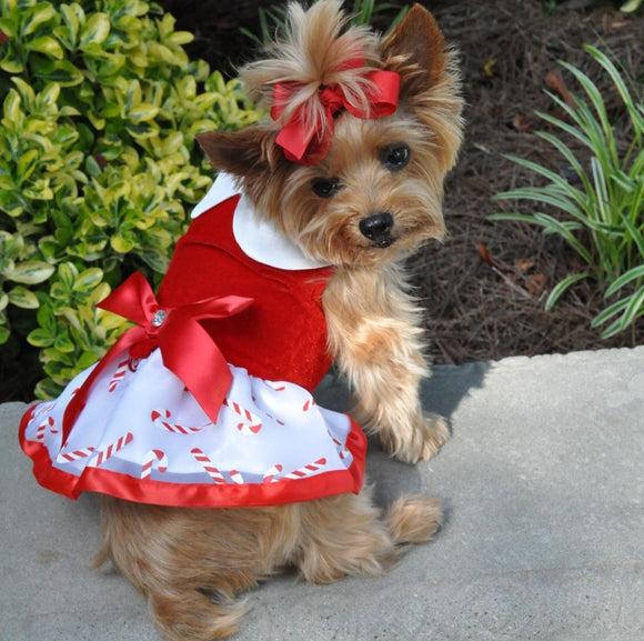 Candy Canes Holiday Dog Harness Dress