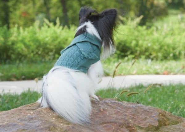 Sage Scarf Dog Sweater