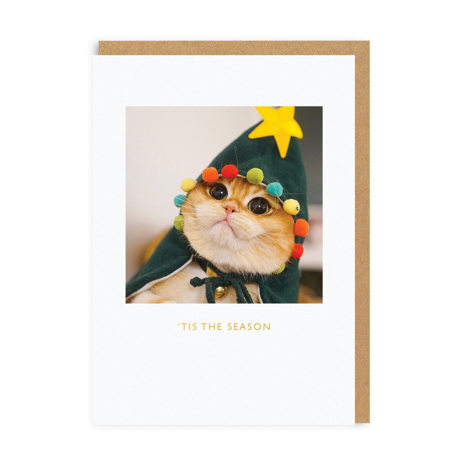 Pisco The Cat Christmas Card