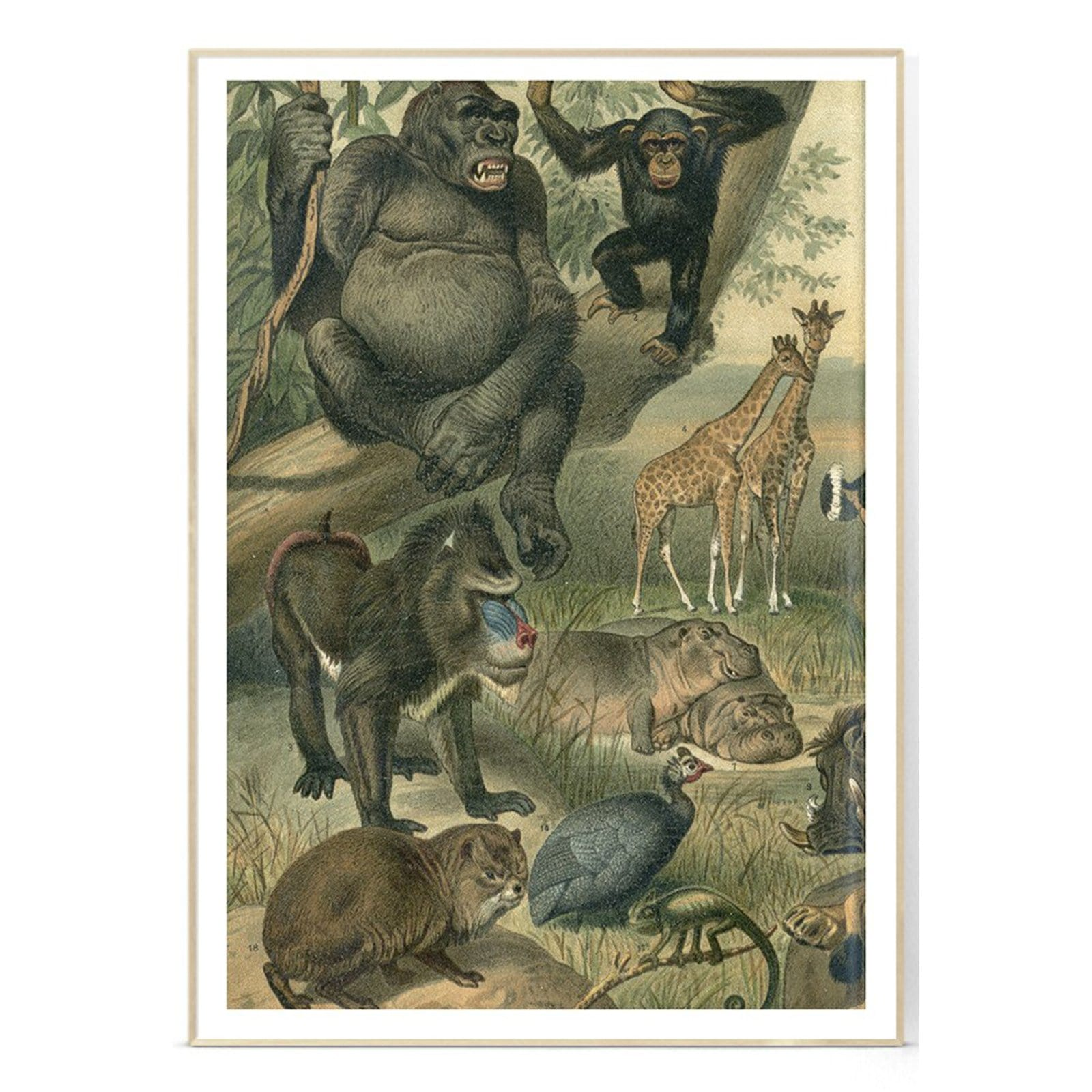 African Fauna Left Side Art Print