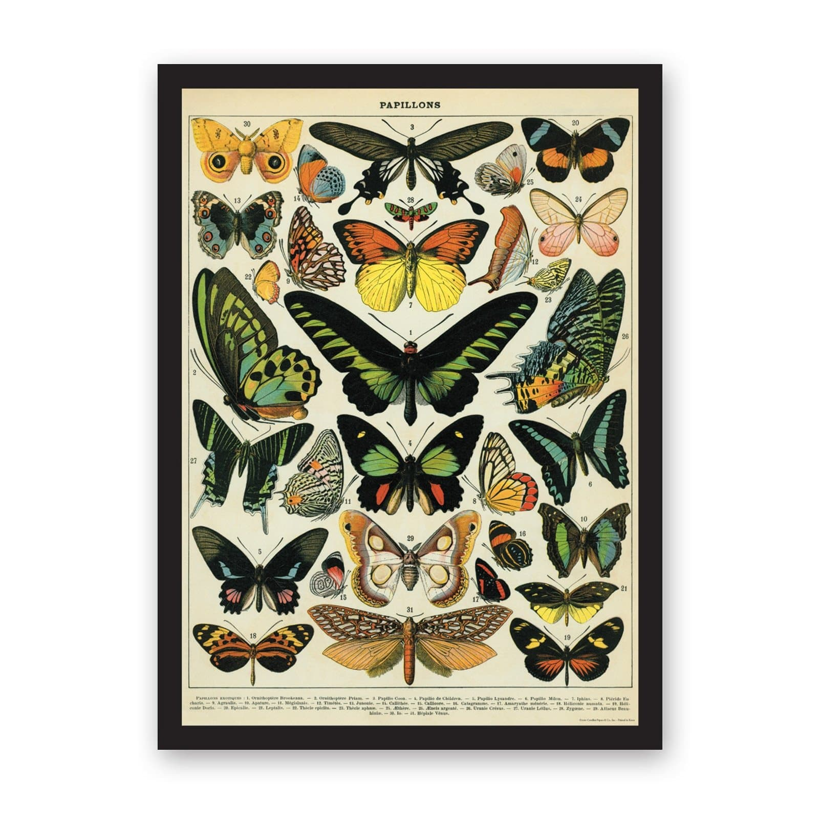 Butterflies Art Print Large