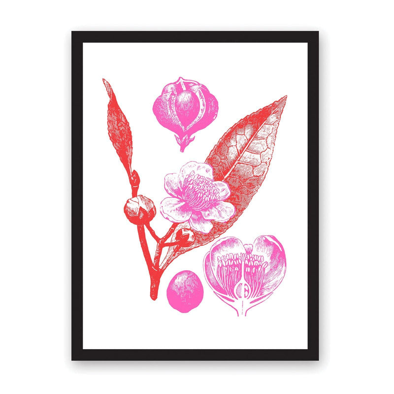 Pink and red flower and leaves illustration in black frame