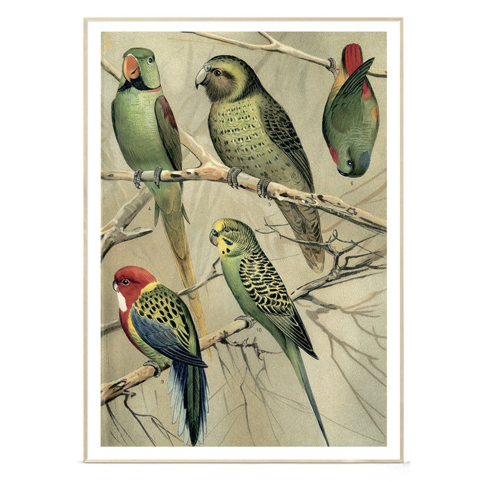 Parrots Right Side Art Print