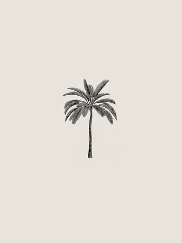 Palm Tree - Sam Scales