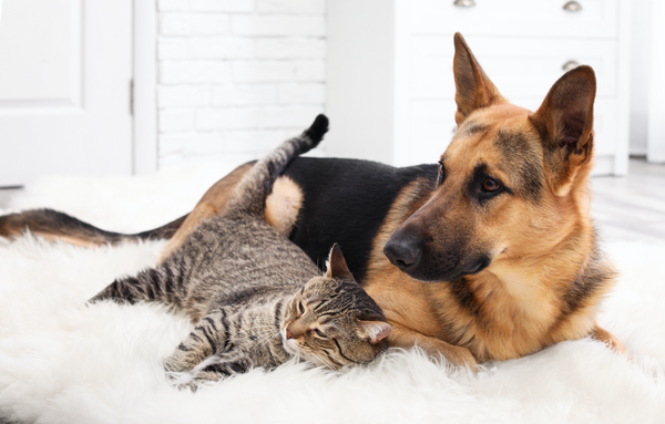 How CBD Can Support the Wellness of Your Furry Companion