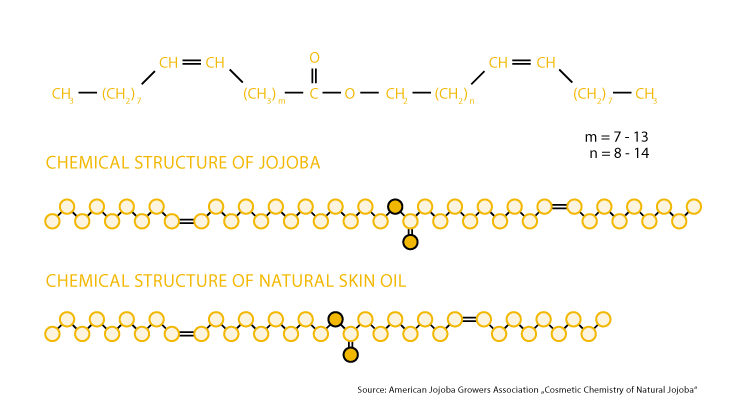 Chemical structure of jojoba and skin oil