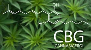 What is CBG | CBG Benefits | CBD Stick | Benefits of CBG | CBG oil for pain
